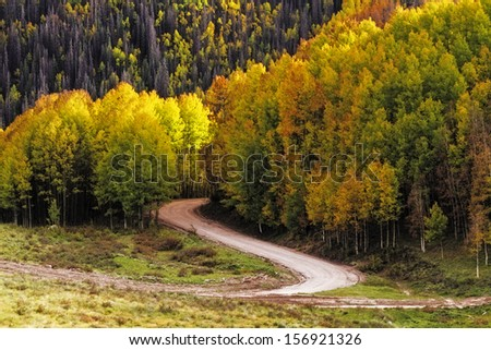 Curved mountain road winding through stands of changing yellow Aspen trees on autumn day