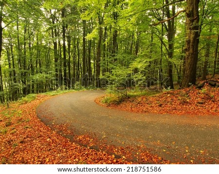 Curved path bellow beech trees at near autumn forest surrounded by fog. Rainy day. - stock photo