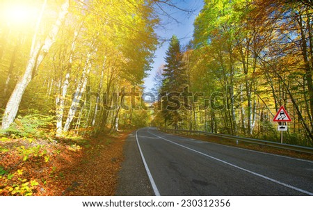 Curved road and forest in autumn  - stock photo