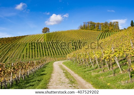 Curved trail through vineyard hills in autumn, clear blue sky, colorful vegetation