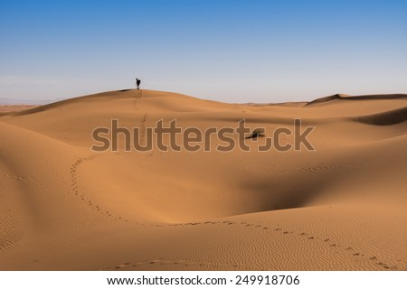 Curves of sand dunes in the Sahara in Morocco. - stock photo