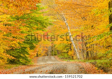 Curving Road Through a Forest in Autumn - stock photo