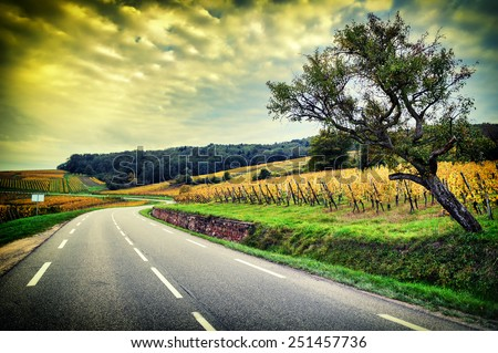 Curvy road at autumn sunset. Alsace, Vosges region. Wineroad  - stock photo