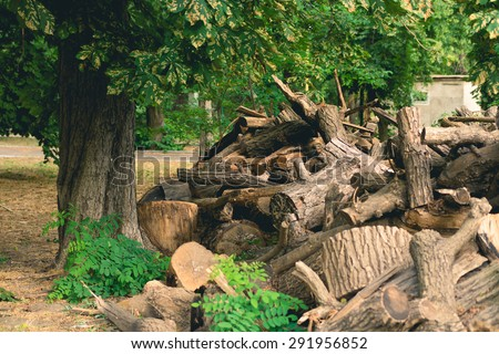 Cut branches, logs and stumps lying in the Park under a big green tree. - stock photo