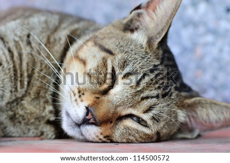 Cut cat sleeping on the ground - stock photo
