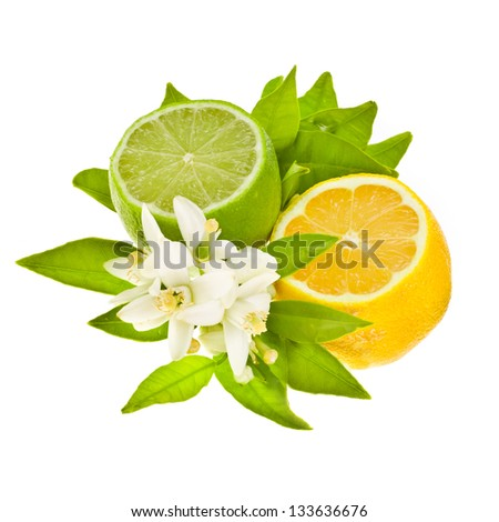 cut citrus fruits - lemon and Lima, decorated with green leaves and flowers isolated on white background - stock photo