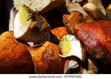 Cut edible mushrooms. Vegetarian food. Macro view.  - stock photo