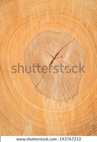 Cut of a log of a beech - stock photo