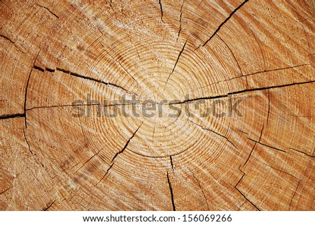 Cut of old trunk is photographed closely. The core of tree consist of growth rings and deep cracks. - stock photo