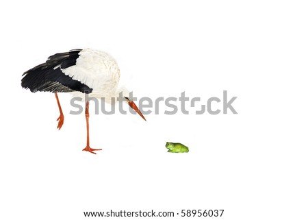 cut out of a white stork  (Ciconia ciconia) gazing at a frog