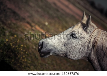 Cut-out view of a horse's head - stock photo