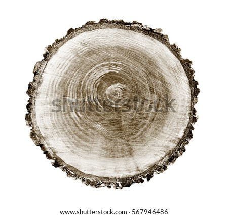 Decayed Timber Tree Rings