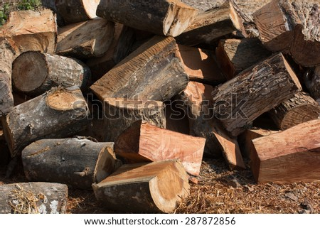 cut pile of firewood woodpile and sunlight