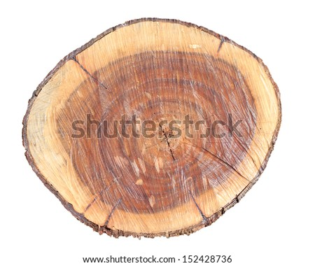 Cut timber or sawed timber on white background