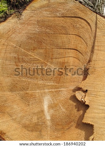 Cut tree background - stock photo
