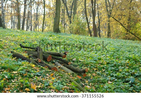 Cut tree stems on green weeds at a forest