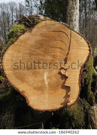 Cut tree stump background - stock photo