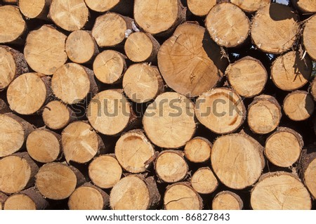 Cut tree stumps background or texture