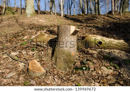 cut tree trunk stump with paint mark on it. deforestation area in forest park. - stock photo