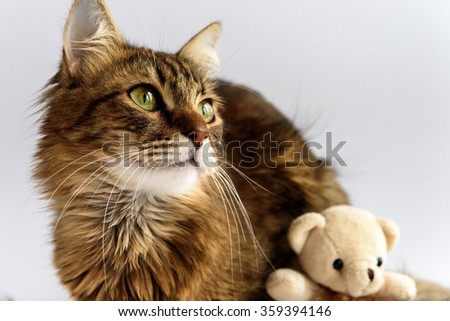 cute adorable cat and teddy toy on white background, family and care concept - stock photo