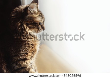 cute adorable sweet cat sitting with amazing wise look, winter holidays