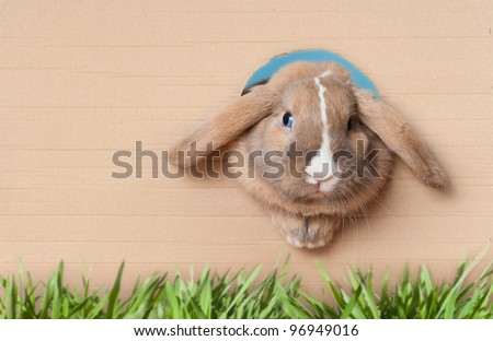 Cute and beautiful rabbit peeking out of the hole in cardboard. Green grass in foreground. Lots of copy space. - stock photo