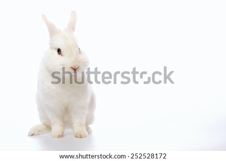 Cute and cuddly. Image of beautiful white rabbit looking at camera  isolated on white background with copy space - stock photo