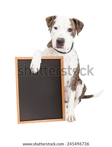 Cute and friendly Pit Bull Dog holding a blank chalkboard to enter a message onto - stock photo
