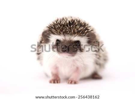 cute and fun young rodent hedgehog baby background
