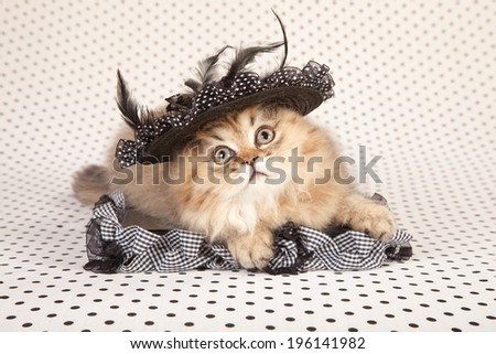 Cute and pretty kitten wearing black feather hat, lying down on black and white polka dot background