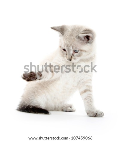 Cute baby cat playing on white background