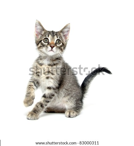 Cute baby cat sitting on white background