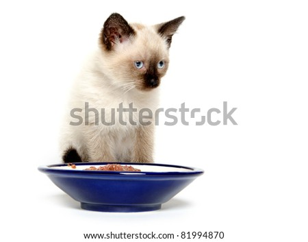 Cute baby cat with blue food bowl on white background - stock photo