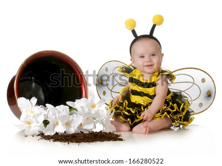 cute baby dressed up like a bumblebee sitting beside a flower pot isolated on white background - stock photo