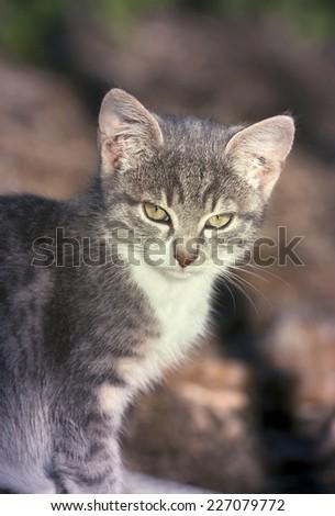 Cute baby kitten looking - stock photo