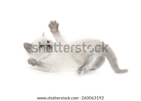 Cute baby kitten playing on white background - stock photo