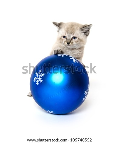 Cute baby kitten playing with large blue Christmas ornament on white background - stock photo