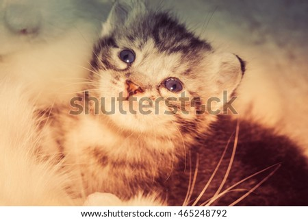 Cute baby kitten portrait close up background, vintage colors.