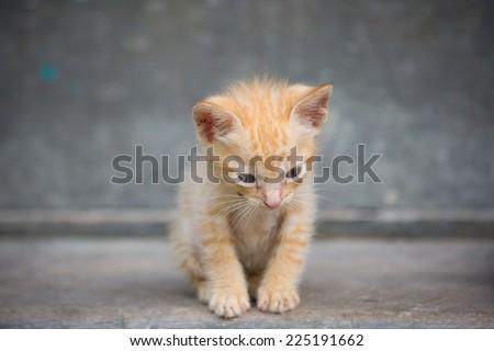Cute baby kitten sit on the floor. - stock photo