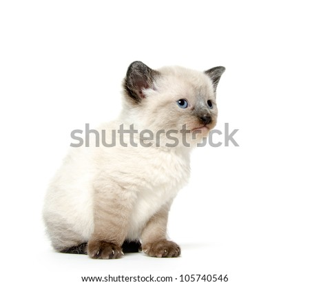Cute baby kitten sitting on white background