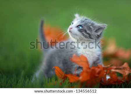 Cute Baby Kittens Playing Outdoors in the Grass - stock photo