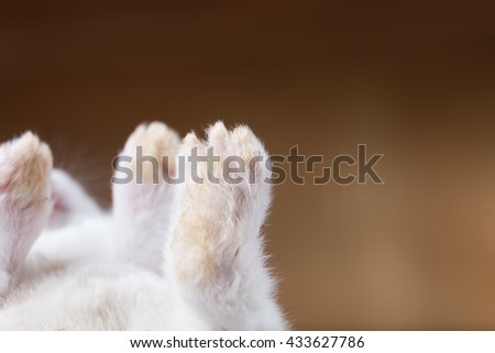 cute baby rabbit's paws are up with blurred brown background - stock photo