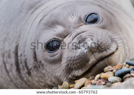Cute Baby seal - stock photo