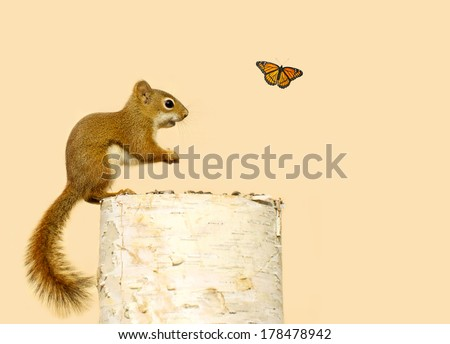 Cute baby squirrel,  enjoying seeds on a log , surprised, and happy, to see a pretty Monarch butterfly passing by. - stock photo