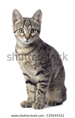 Cute baby tabby cat on white background - stock photo