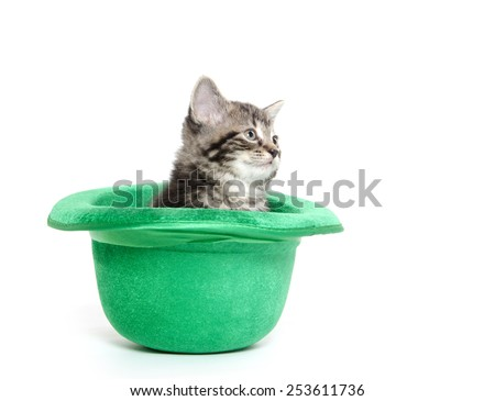 Cute baby tabby kitten inside of a green hat for St. Patrick's Day on white background - stock photo