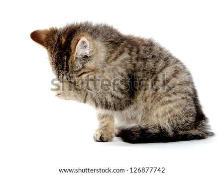 Cute baby tabby kitten rubbing its eyes and talking a bath on white background - stock photo