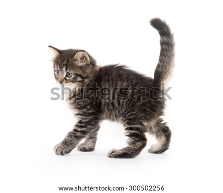 Cute baby tabby kittenplaying isolated on white background - stock photo