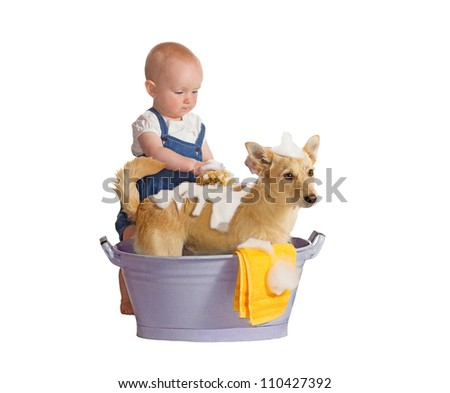 Cute baby washing yellow dog, jack russel terrier - isolated on white - stock photo