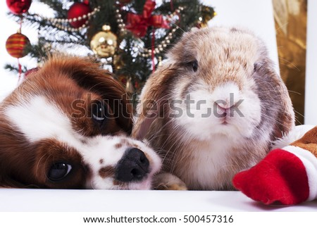 Cute beautiful cavalier king charles spaniel with christmas tree.